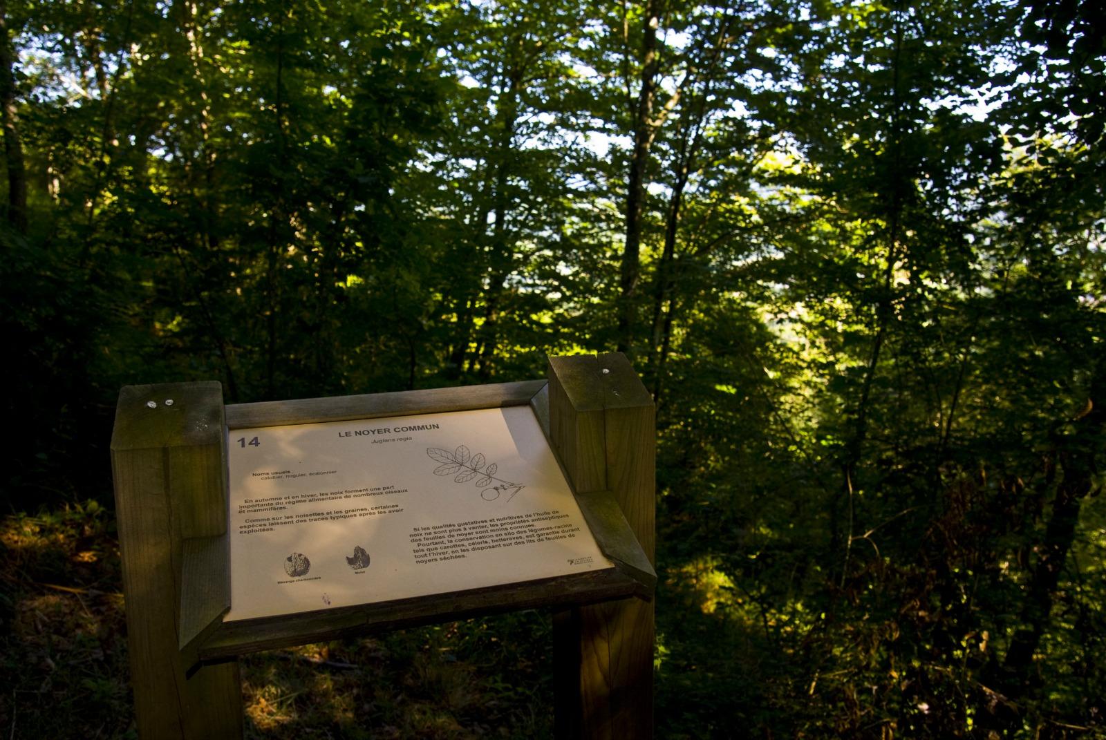 Le sentier découverte du bois du Calvaire  Bois du Calvaire © MCC