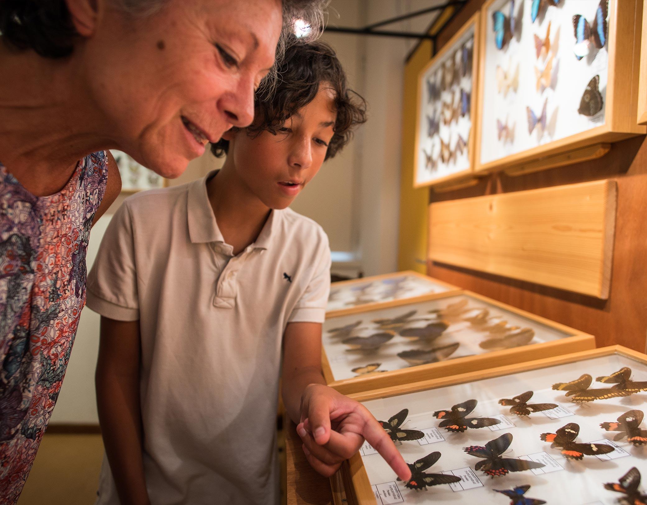 Muséum Papillons et insectes Faverges © T.Nalet/Sources du lac d'Annecy