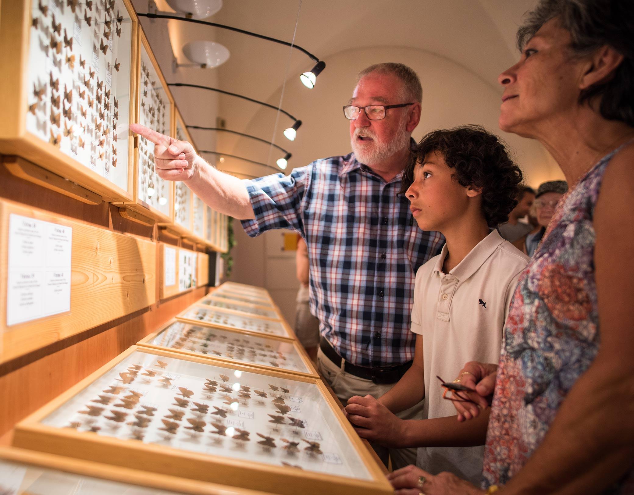 Muséum Papillons et insectes à Faverges © T.Nalet/Source du Lac
