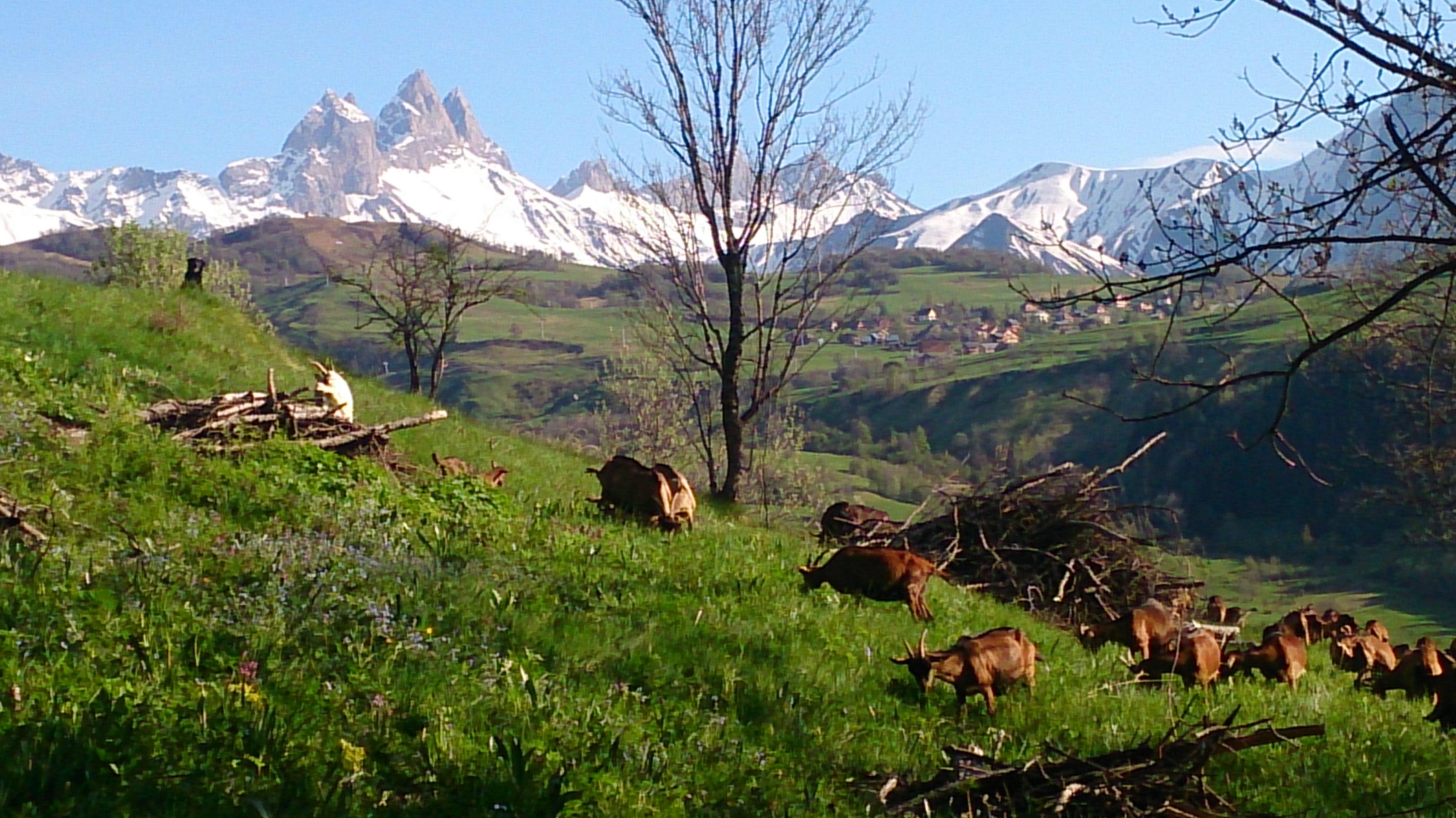 Chèvrerie de Champlan © Nicolas Wax