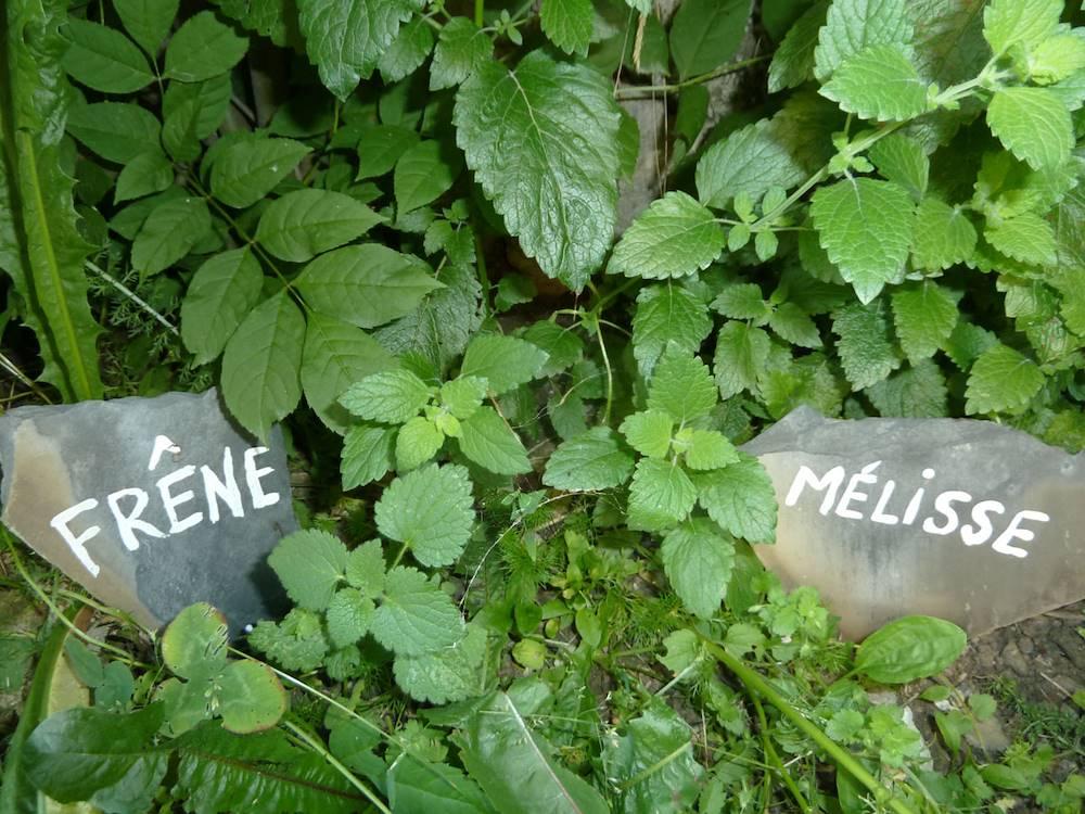 Plantes officinales © Infusion Les Aiguilles d'Arves