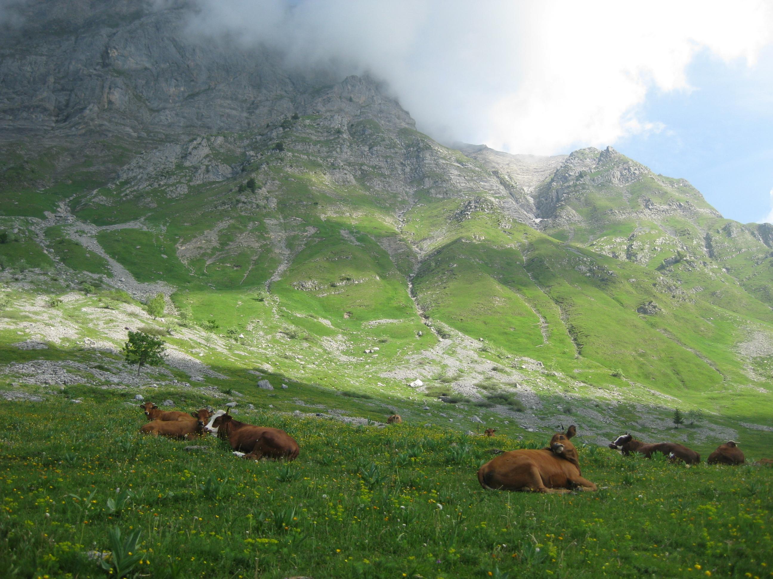Alpage Les Regottes © Office de Tourisme d'Ugine