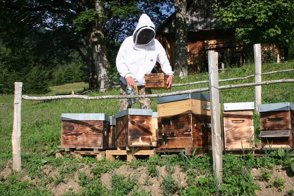le rucher du presbytère ©