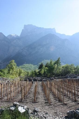 Vignoble de babylone © Solidart Maurienne