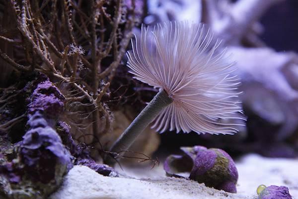 Aquarium-Muséum © FTPL - Patrice Fagnoul