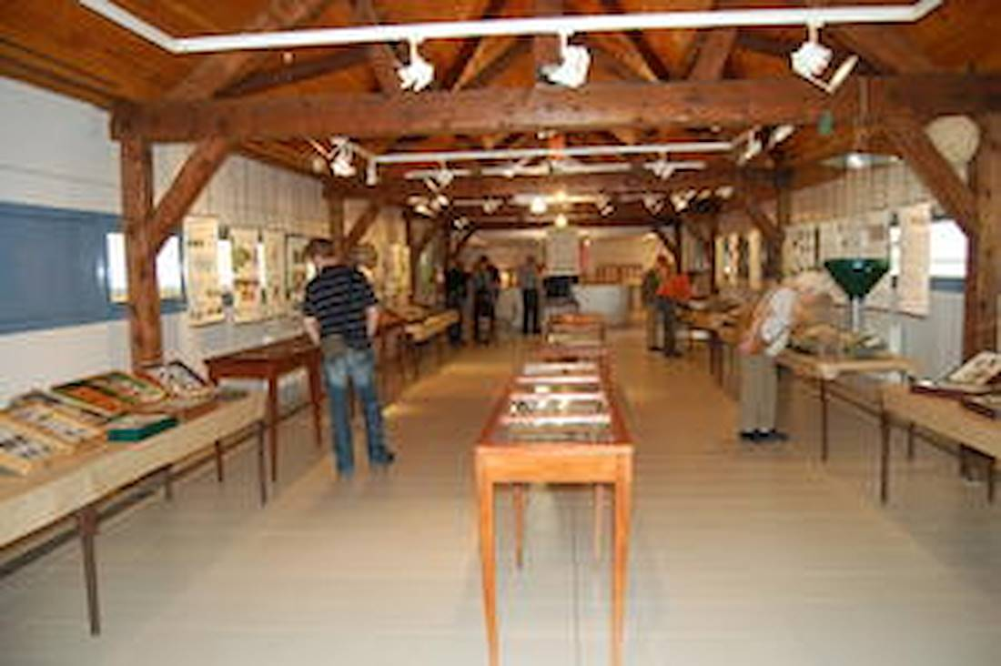 © Museum d'histoire Naturelle